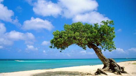 Eco Destination Management Services DMS DMC Aruba divi-tree-aruba