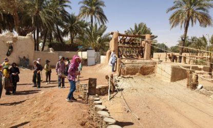 Hail Jubbah Sawani Camels